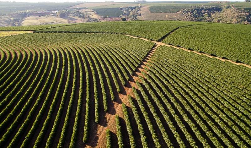 ...sieht eher so aus. Eine Plantage in Minas Gerais in Brasilien.