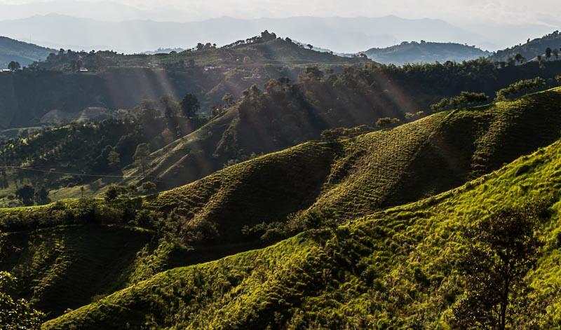 So wie diese kolumbianische Waldplantage stellen wir uns - Werbung sei Dank - Kaffeeplantangen weltweit vor. Die Realität allerdings ...