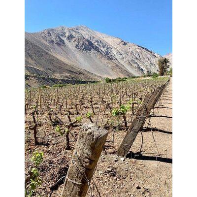 mountainbyrd Gran Pisco de Chile Beauty Shot